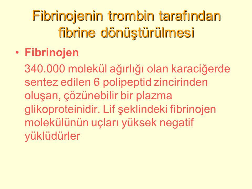 Fibrinojenin trombin tarafından fibrine dönüştürülmesi