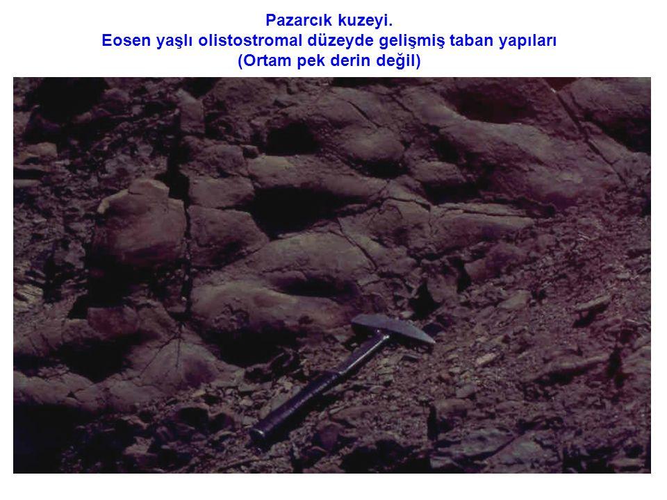 Pazarcık kuzeyi. Eosen yaşlı olistostromal düzeyde gelişmiş taban yapıları (Ortam pek derin değil)