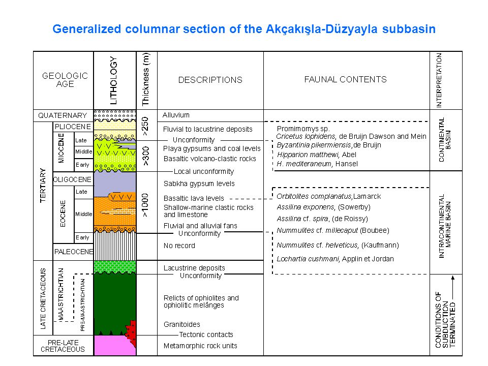 Generalized columnar section of the Akçakışla-Düzyayla subbasin