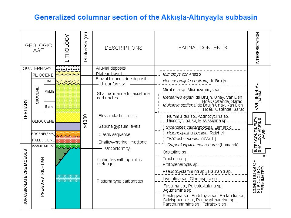 Generalized columnar section of the Akkışla-Altınyayla subbasin