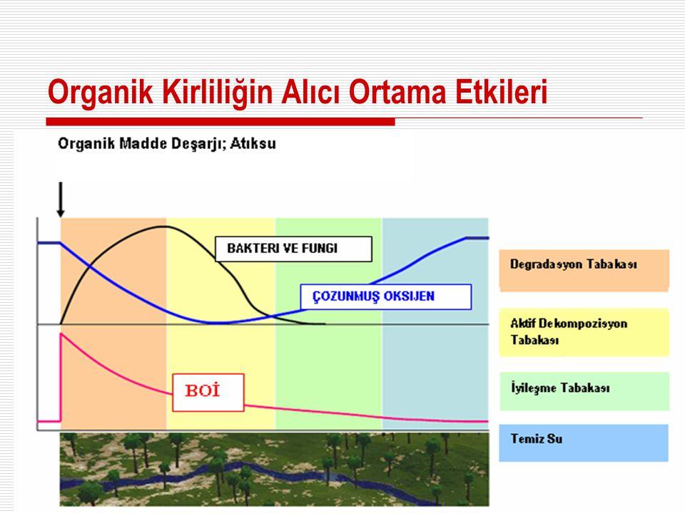 Organik Kirliliğin Alıcı Ortama Etkileri