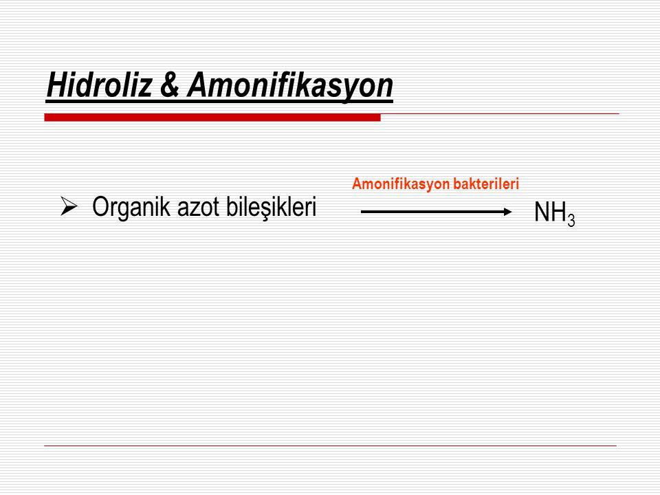 Hidroliz & Amonifikasyon