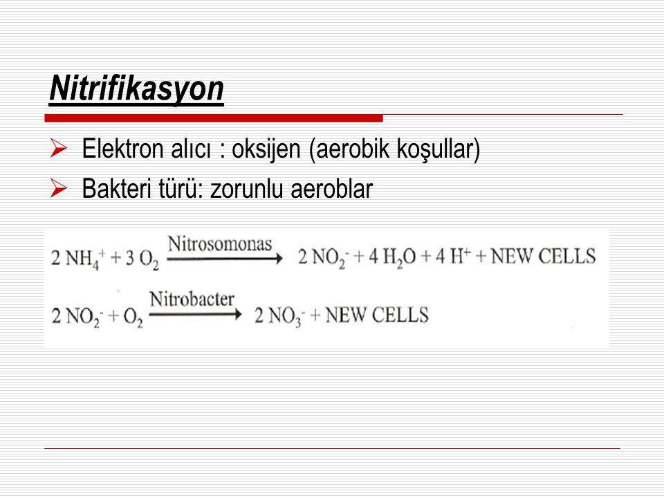 Nitrifikasyon Elektron alıcı : oksijen (aerobik koşullar)