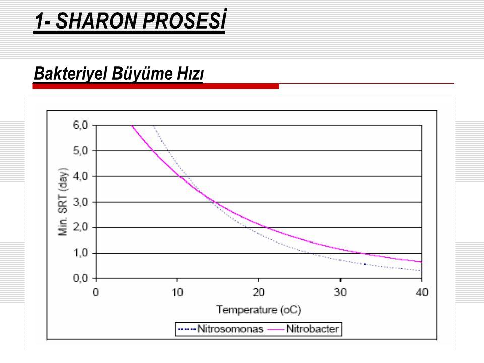 1- SHARON PROSESİ Bakteriyel Büyüme Hızı