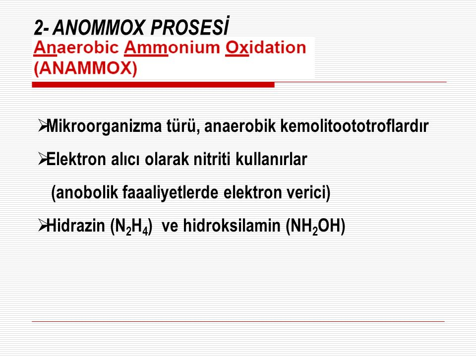 2- ANOMMOX PROSESİ Mikroorganizma türü, anaerobik kemolitoototroflardır. Elektron alıcı olarak nitriti kullanırlar.