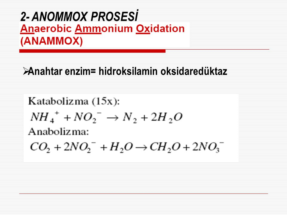 2- ANOMMOX PROSESİ Anahtar enzim= hidroksilamin oksidaredüktaz