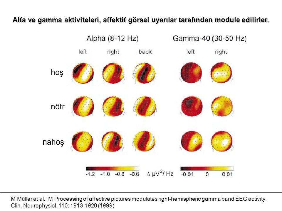 Alfa ve gamma aktiviteleri, affektif görsel uyarılar tarafından module edilirler.