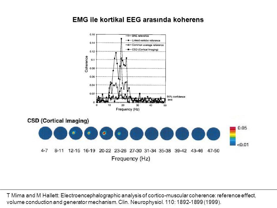 EMG ile kortikal EEG arasında koherens