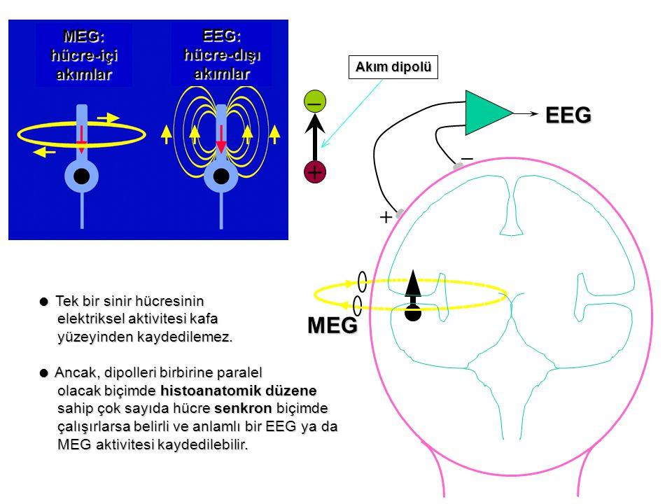 – + EEG _ + MEG MEG: hücre-içi akımlar EEG: hücre-dışı akımlar
