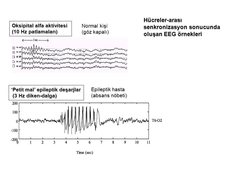 senkronizasyon sonucunda oluşan EEG örnekleri