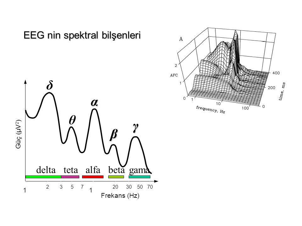 δ α θ γ β EEG nin spektral bilşenleri delta teta alfa beta gama