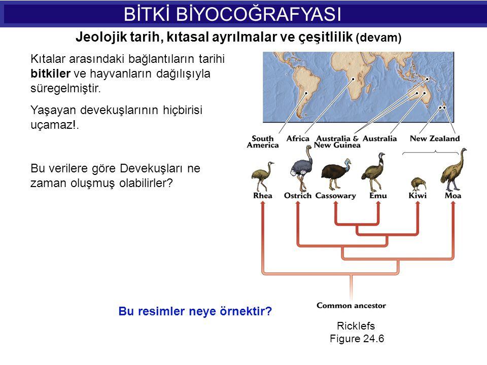 BİTKİ BİYOCOĞRAFYASI Jeolojik tarih, kıtasal ayrılmalar ve çeşitlilik (devam)