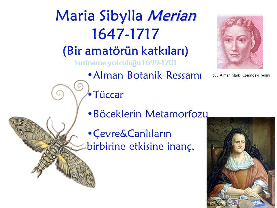 Maria Sibylla Merian 1647-1717 (Bir amatörün katkıları) Suriname yolculuğu 1699-1701