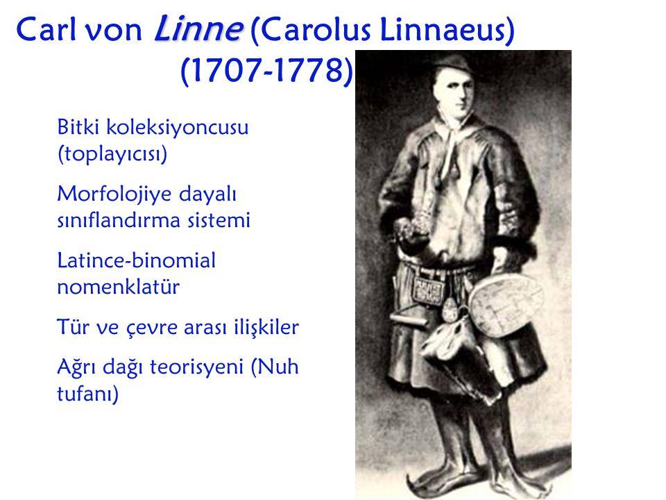 Carl von Linne (Carolus Linnaeus) (1707-1778)