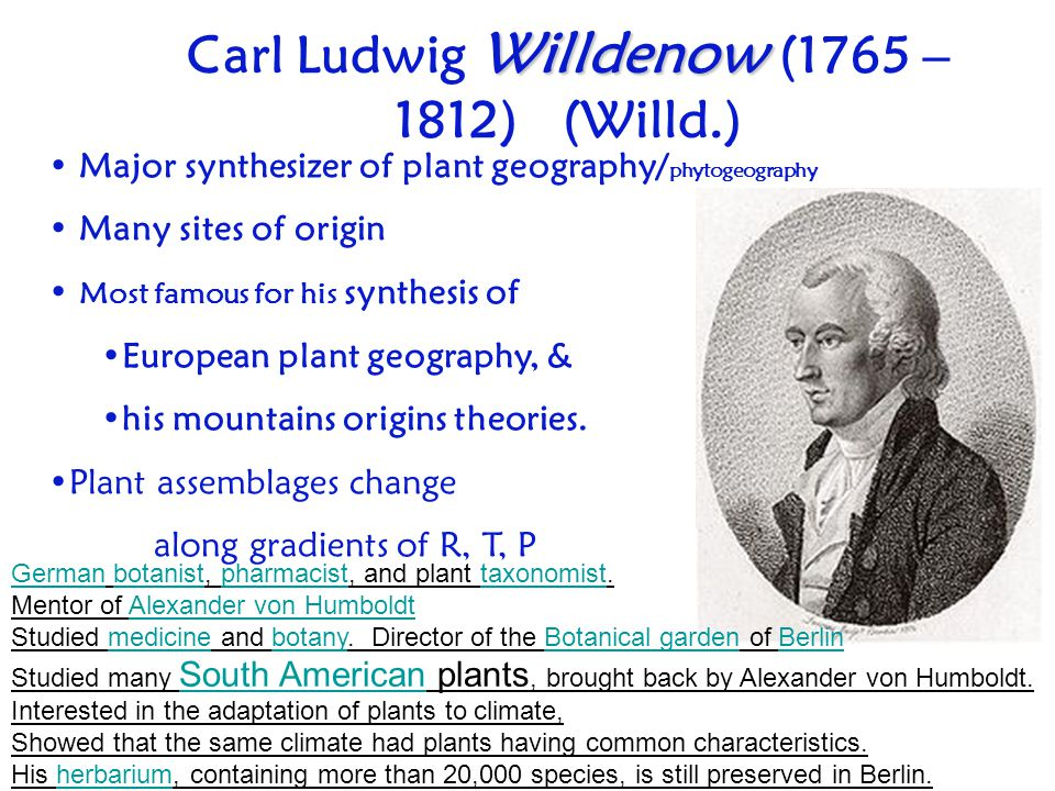 Carl Ludwig Willdenow (1765 – 1812) (Willd.)