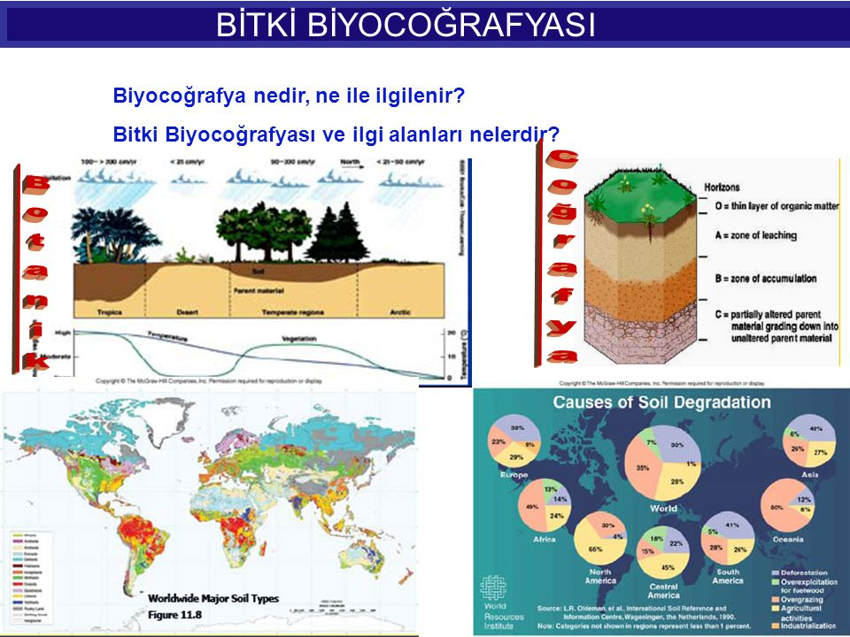 BİTKİ BİYOCOĞRAFYASI Botanik Biyocoğrafya nedir, ne ile ilgilenir