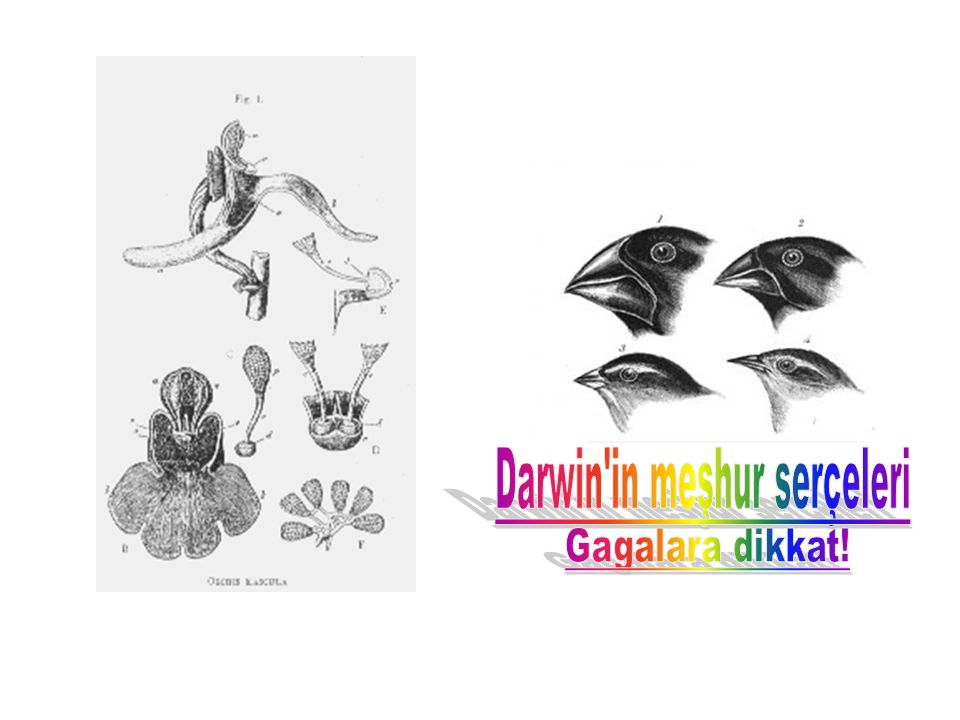 Darwin in meşhur serçeleri