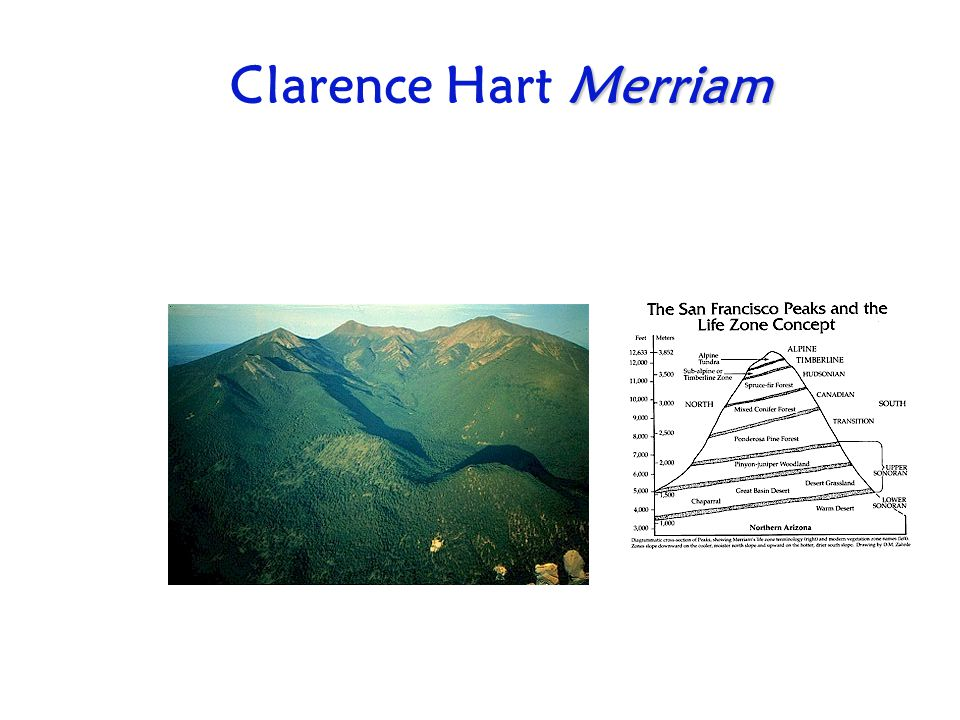 Clarence Hart Merriam