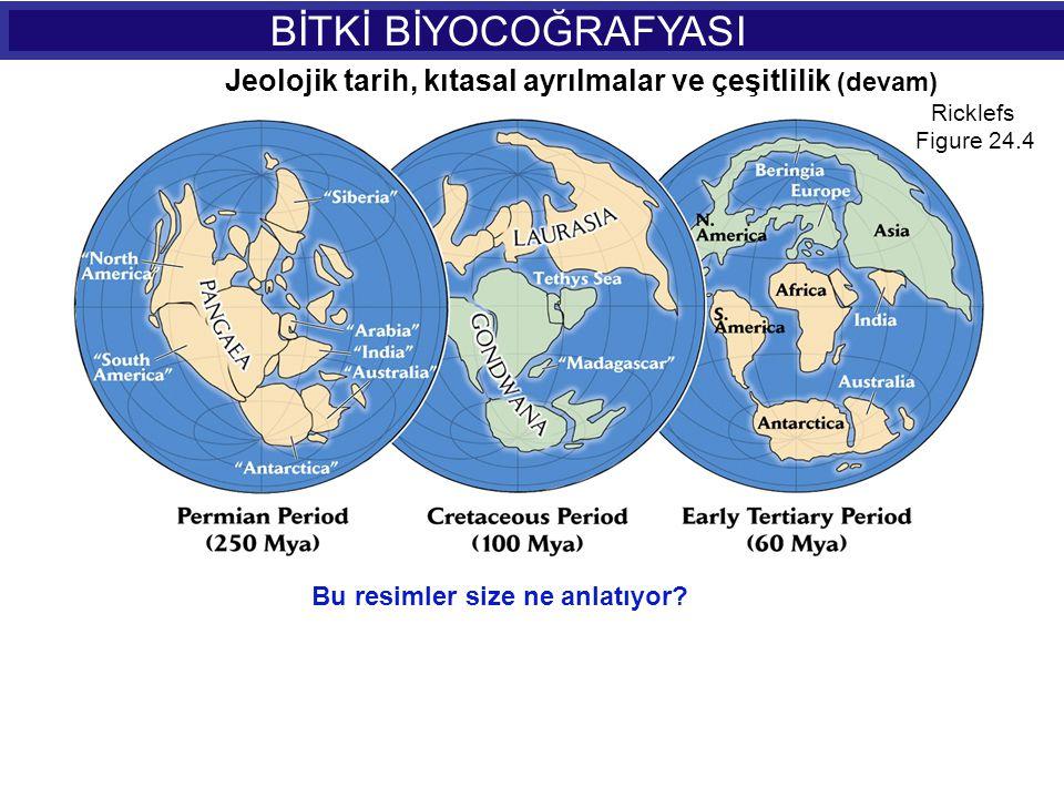 BİTKİ BİYOCOĞRAFYASI Jeolojik tarih, kıtasal ayrılmalar ve çeşitlilik (devam) Ricklefs. Figure 24.4.