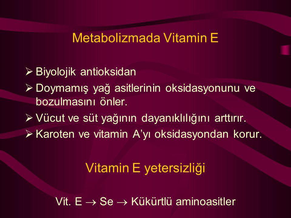 Metabolizmada Vitamin E