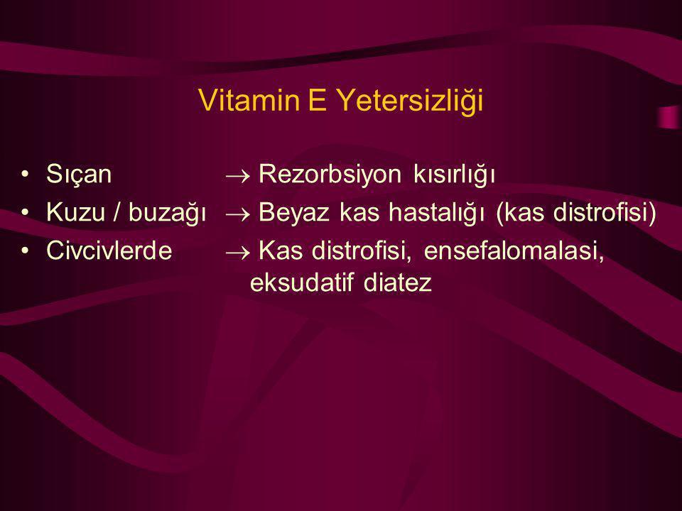 Vitamin E Yetersizliği