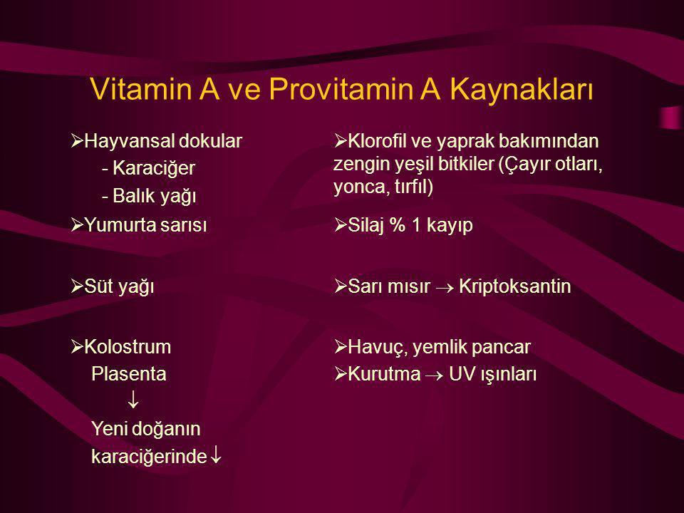 Vitamin A ve Provitamin A Kaynakları