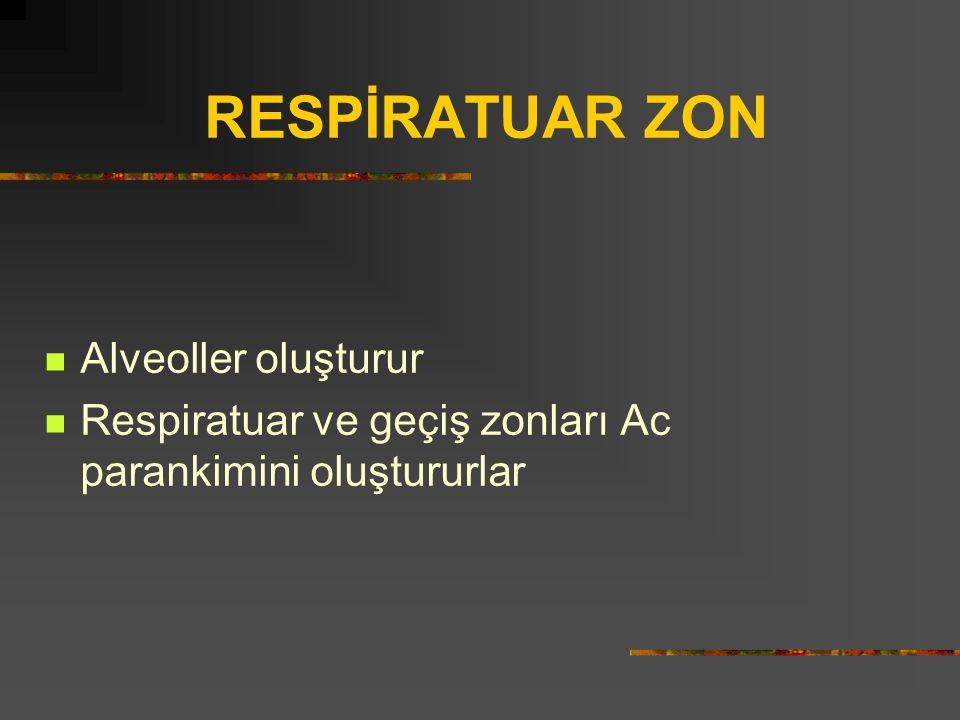 RESPİRATUAR ZON Alveoller oluşturur
