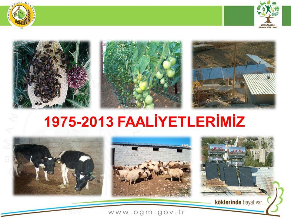 1975-2013 FAALİYETLERİMİZ