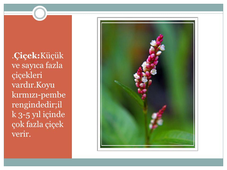 Çiçek:Küçük ve sayıca fazla çiçekleri vardır