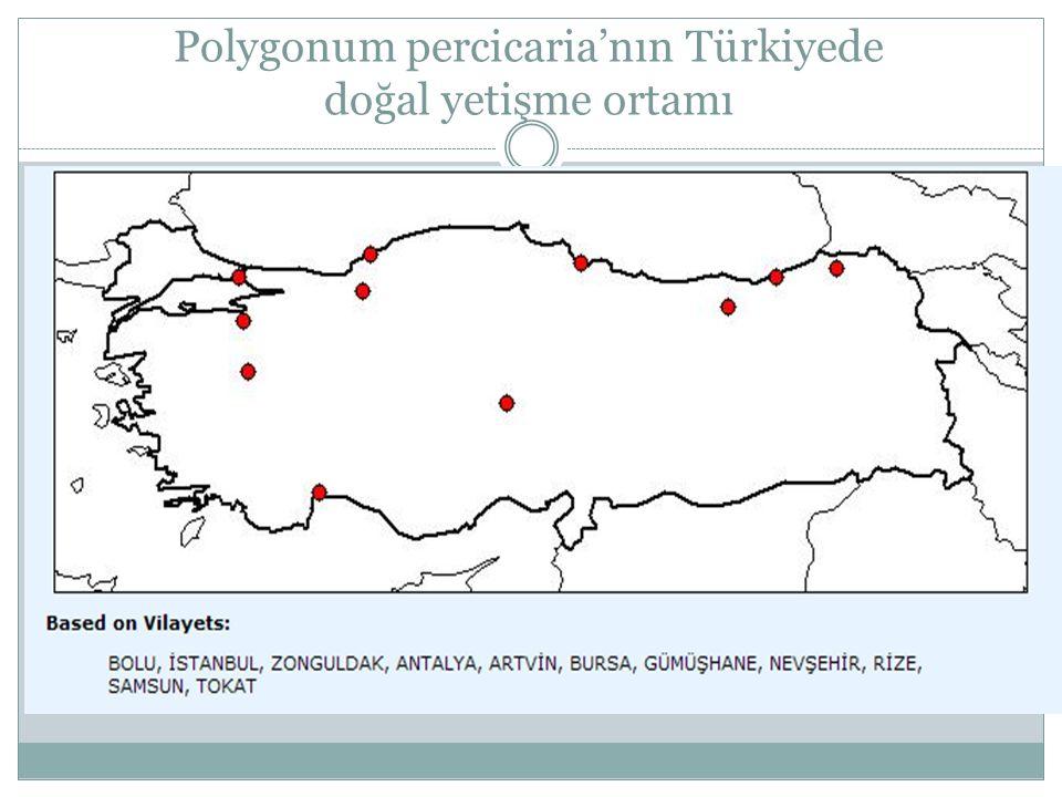 Polygonum percicaria'nın Türkiyede doğal yetişme ortamı