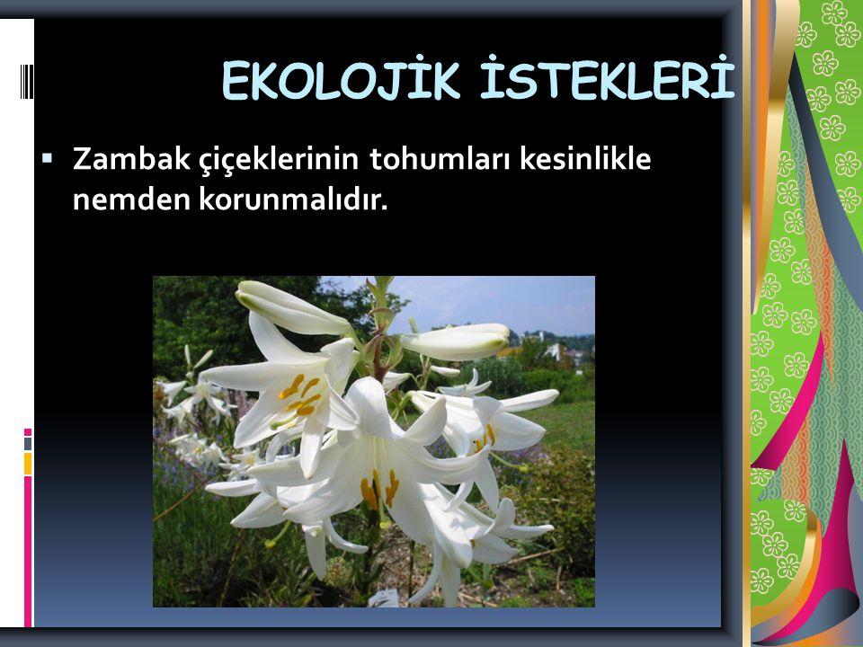 EKOLOJİK İSTEKLERİ Zambak çiçeklerinin tohumları kesinlikle nemden korunmalıdır.