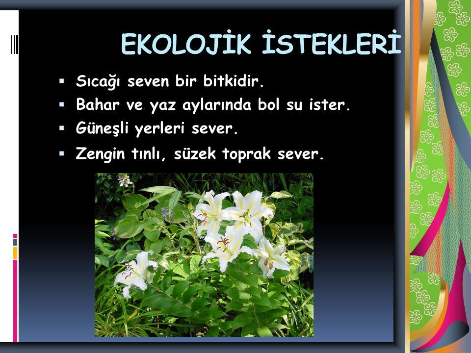 EKOLOJİK İSTEKLERİ Sıcağı seven bir bitkidir.