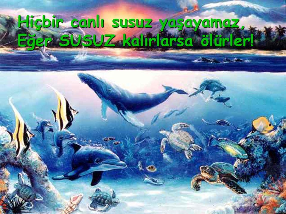 Hiçbir canlı susuz yaşayamaz, Eğer SUSUZ kalırlarsa ölürler!