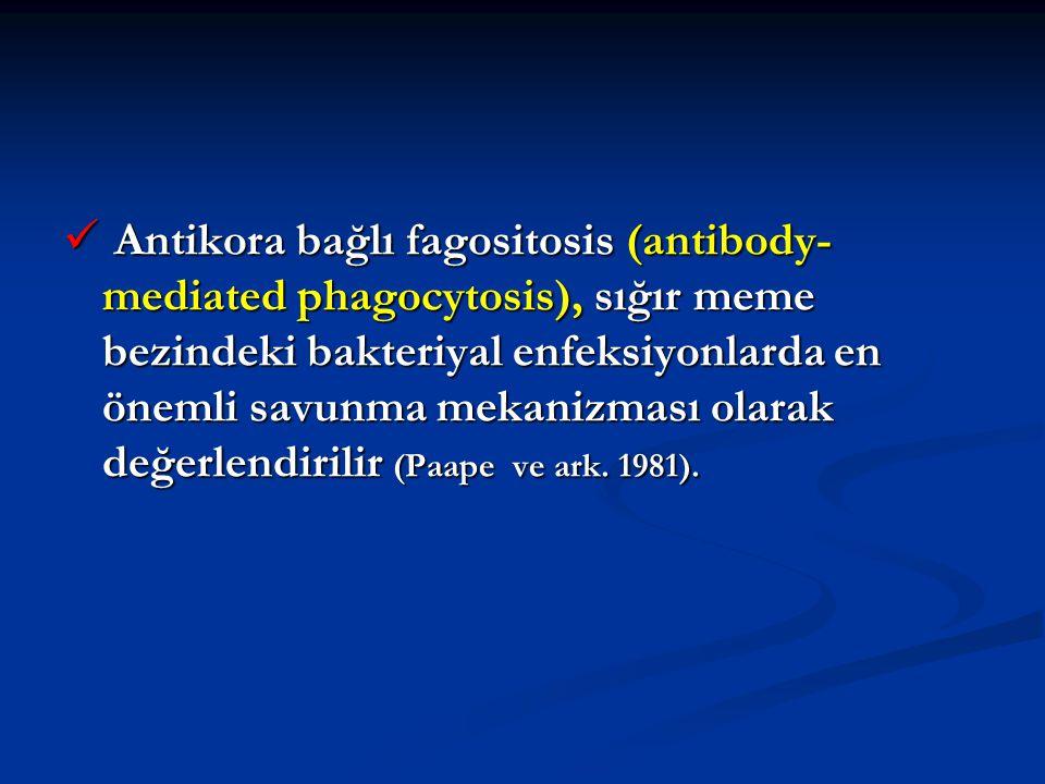 Antikora bağlı fagositosis (antibody-mediated phagocytosis), sığır meme bezindeki bakteriyal enfeksiyonlarda en önemli savunma mekanizması olarak değerlendirilir (Paape ve ark.