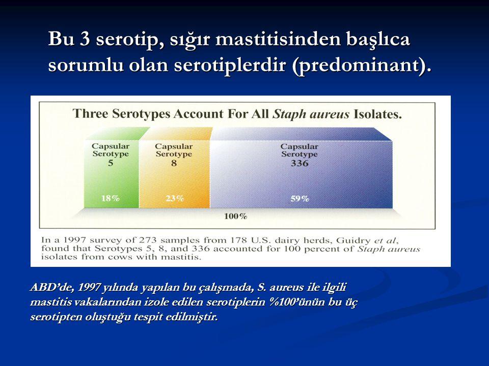 Bu 3 serotip, sığır mastitisinden başlıca sorumlu olan serotiplerdir (predominant).