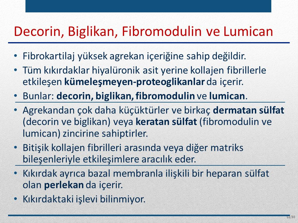 Decorin, Biglikan, Fibromodulin ve Lumican