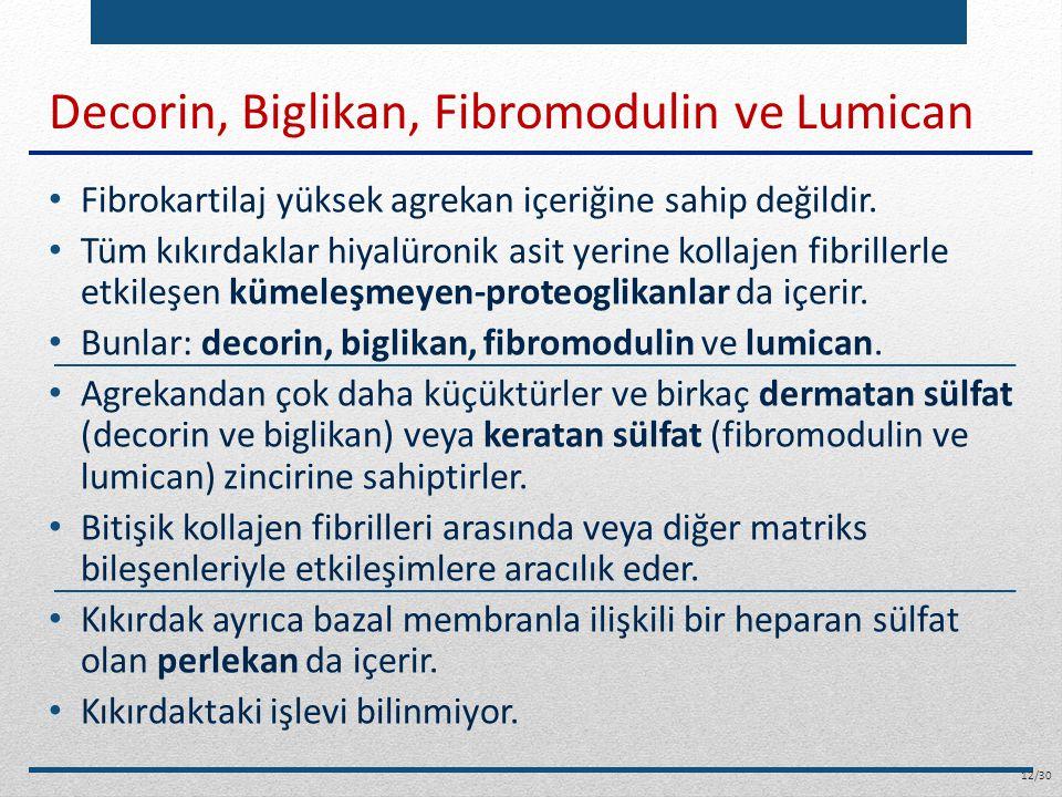 Decorin, Biglikan, Fibromodulin ve Lumican