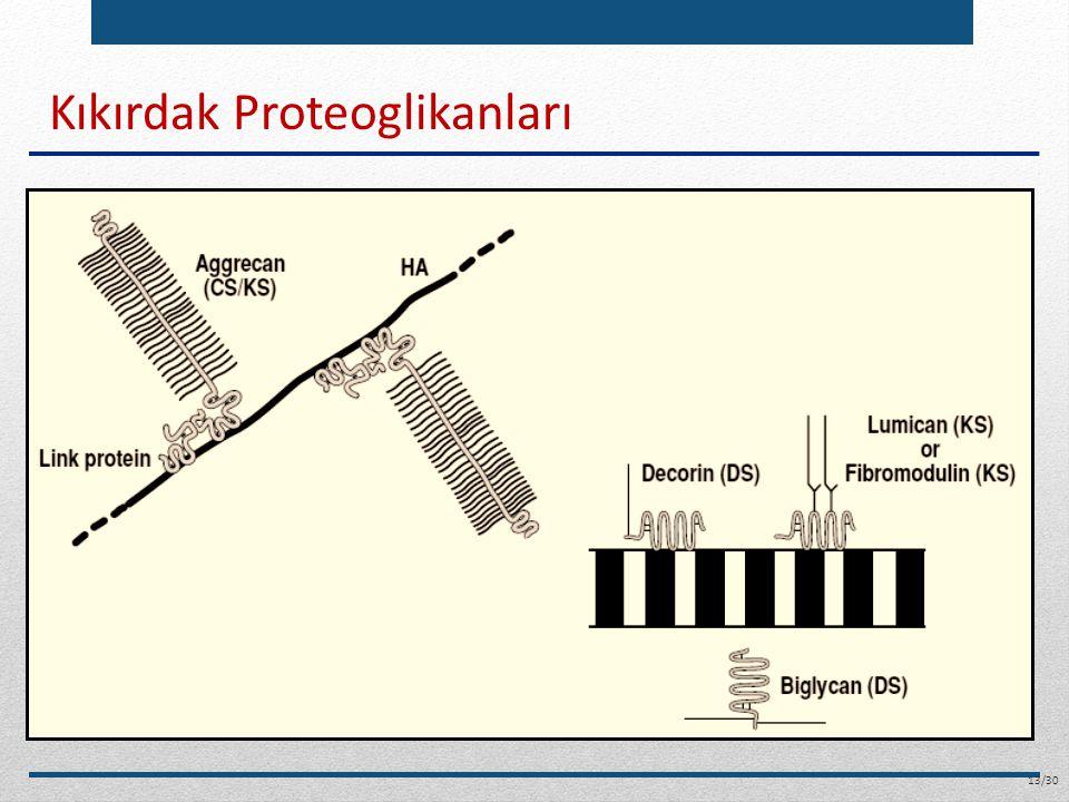 Kıkırdak Proteoglikanları