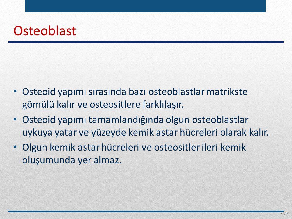 Osteoblast Osteoid yapımı sırasında bazı osteoblastlar matrikste gömülü kalır ve osteositlere farklılaşır.