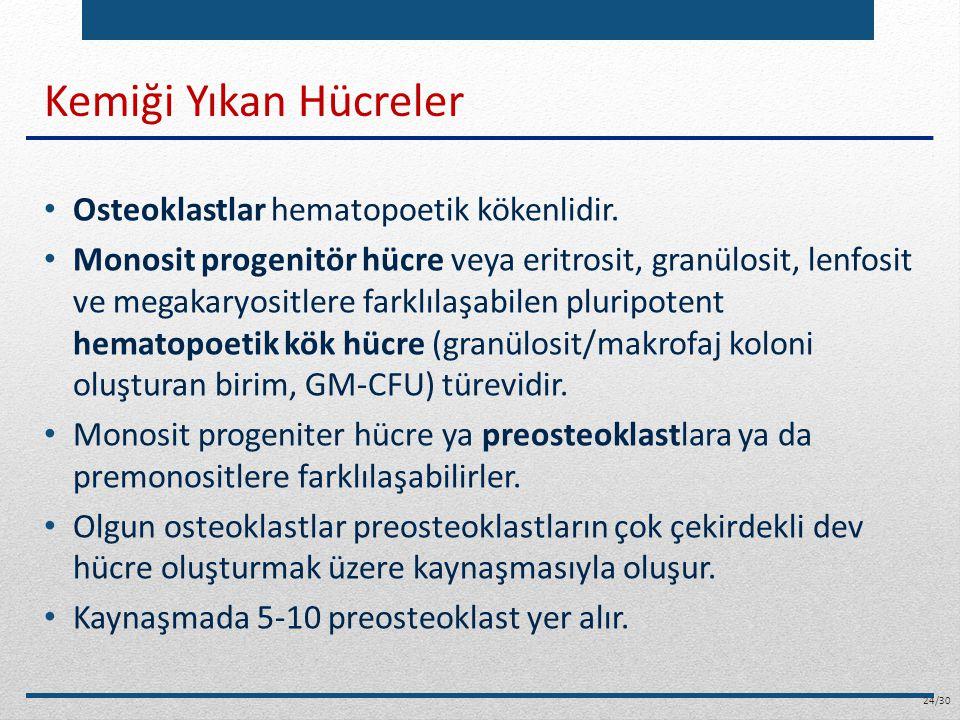 Kemiği Yıkan Hücreler Osteoklastlar hematopoetik kökenlidir.