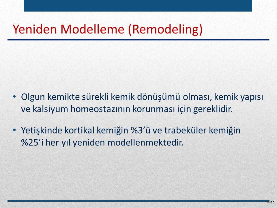 Yeniden Modelleme (Remodeling)