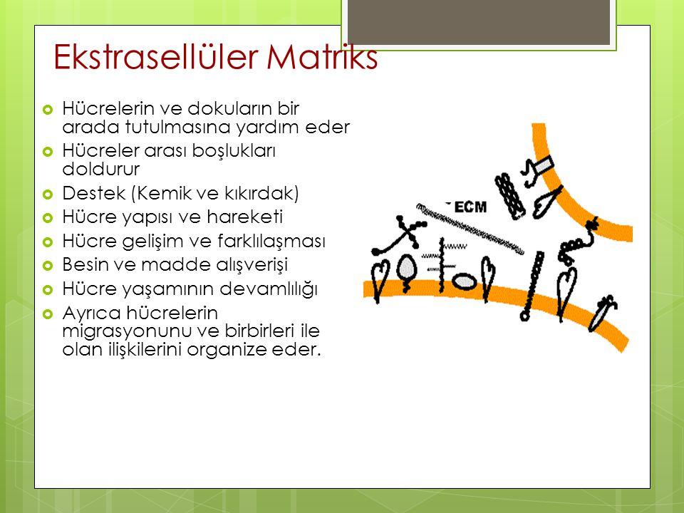 Ekstrasellüler Matriks