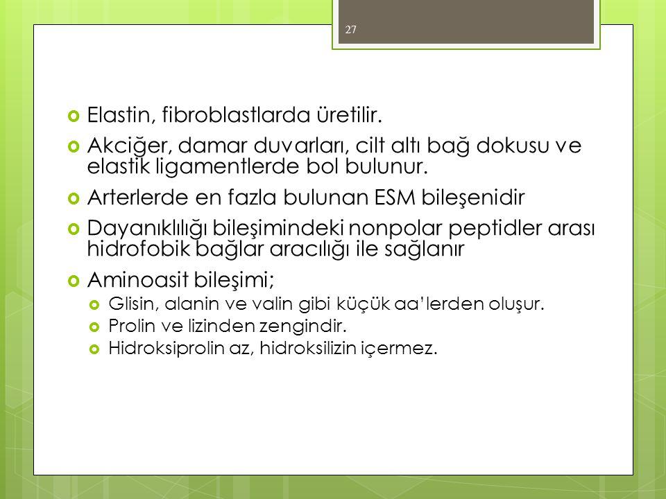 Elastin, fibroblastlarda üretilir.