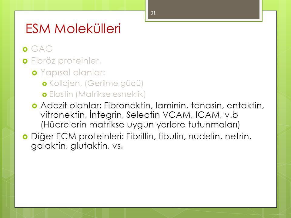 ESM Molekülleri GAG Fibröz proteinler. Yapısal olanlar: