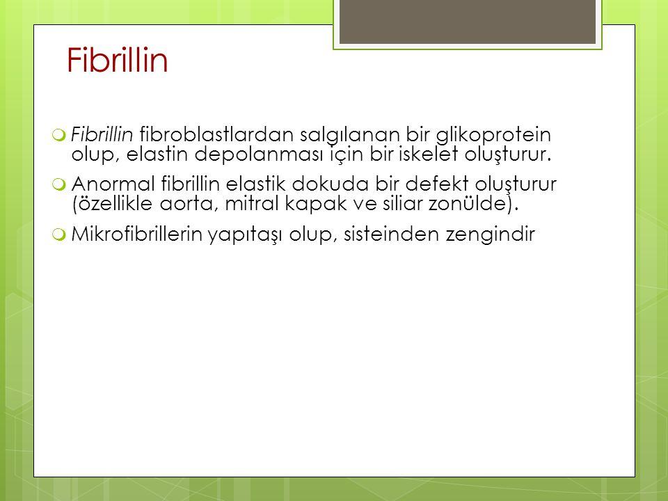 Fibrillin Fibrillin fibroblastlardan salgılanan bir glikoprotein olup, elastin depolanması için bir iskelet oluşturur.