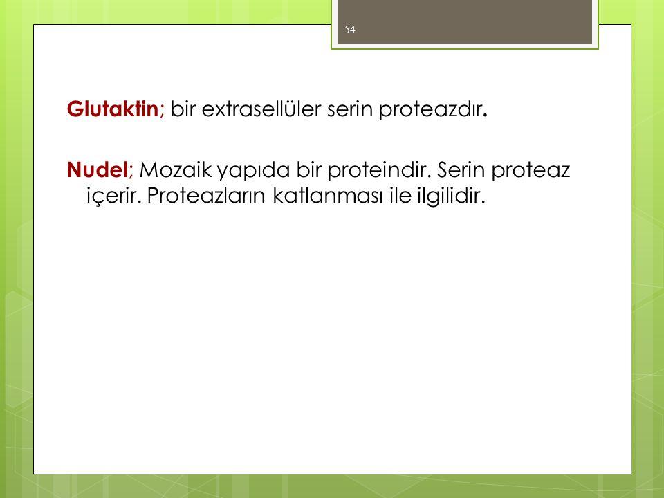 Glutaktin; bir extrasellüler serin proteazdır.
