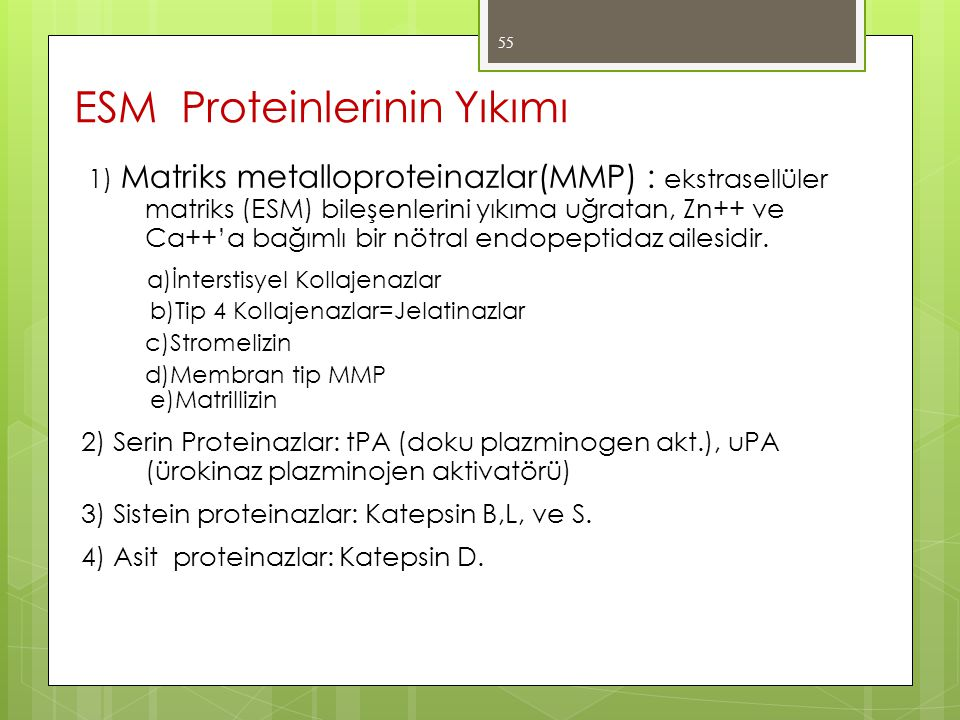 ESM Proteinlerinin Yıkımı
