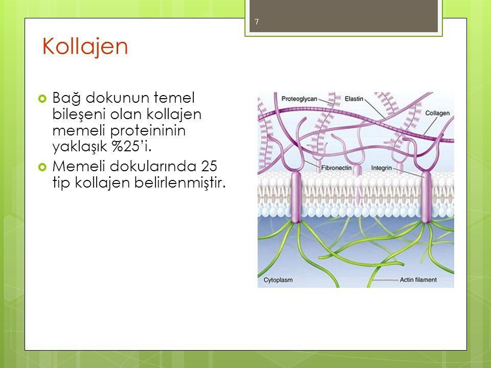Kollajen Bağ dokunun temel bileşeni olan kollajen memeli proteininin yaklaşık %25'i.