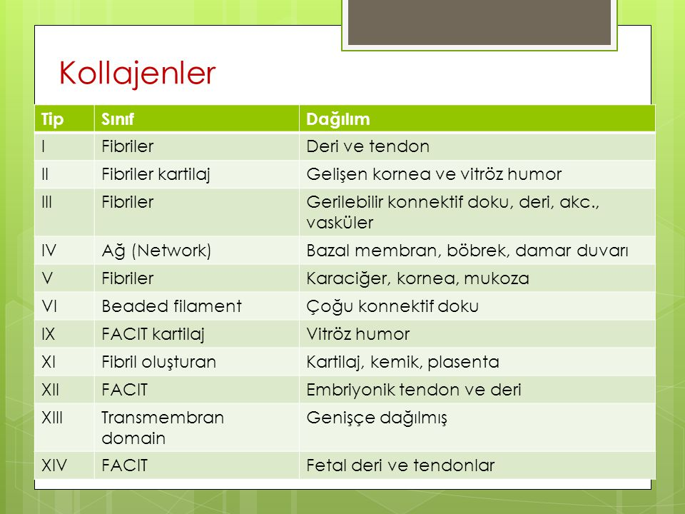 Kollajenler Tip Sınıf Dağılım I Fibriler Deri ve tendon II