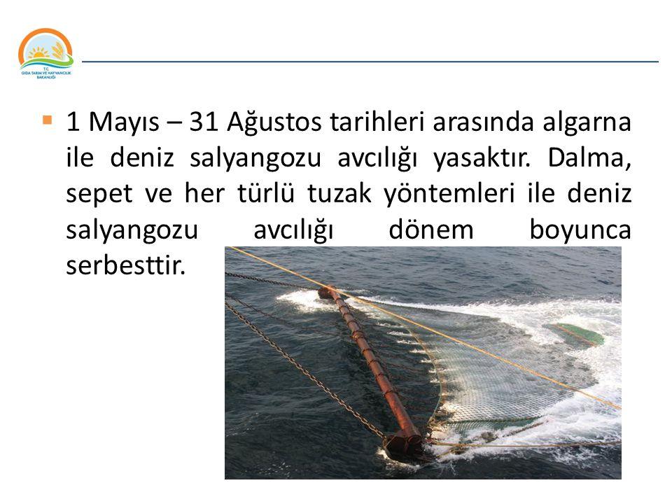 1 Mayıs – 31 Ağustos tarihleri arasında algarna ile deniz salyangozu avcılığı yasaktır.